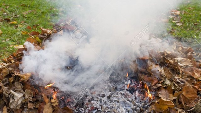Viral Video Against Leaf Burning