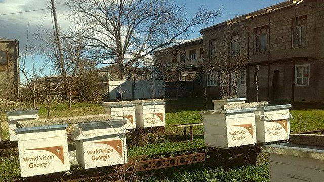 Beekeeping - self-employment opportunity